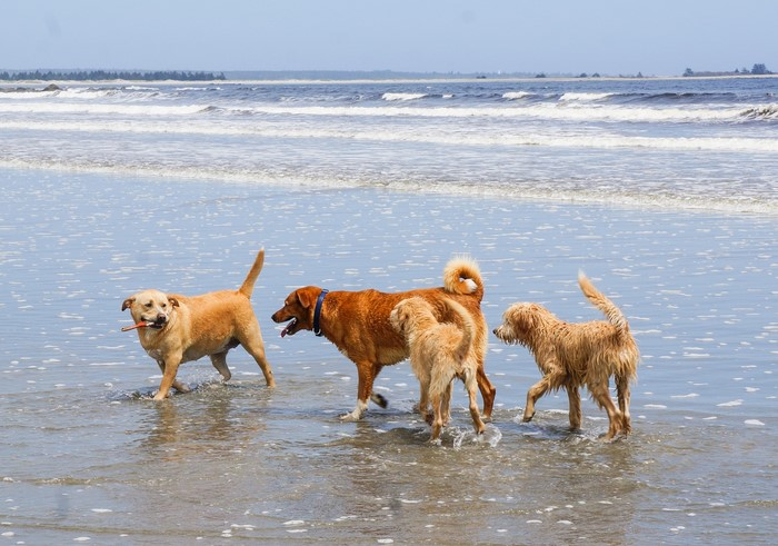 puppies_beach_shelburne_nova_scotia