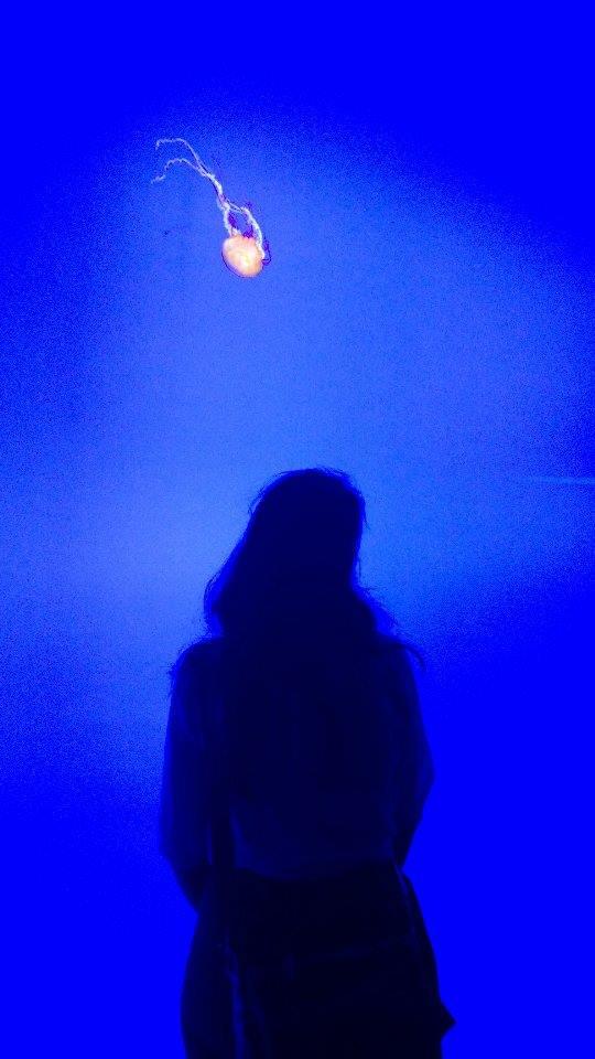 ripley_aquarium_toronto_jellyfish_2