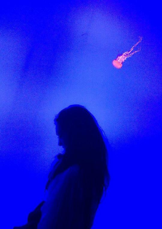 ripley_aquarium_toronto_jellyfish_3