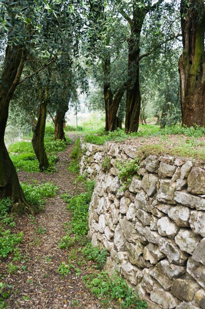 climbing_to_castello_di_arco_italy_2