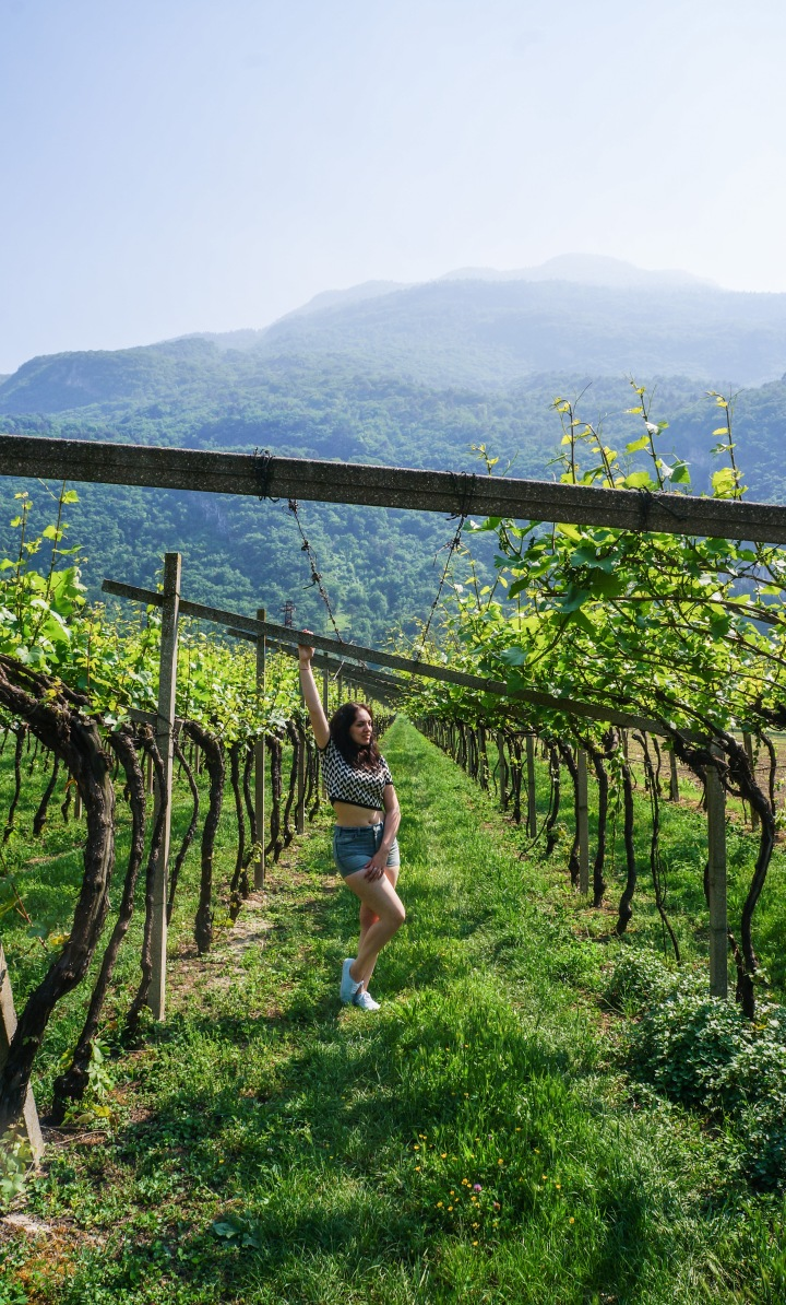 italy_vineyard_mountain_sage