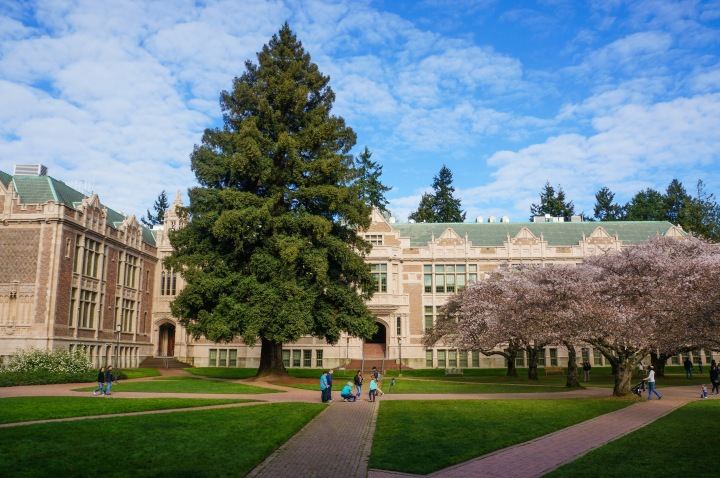 cherry_blossoms_spring_university_washington_trendy_techie_4